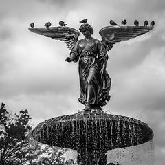 Angel of the Waters (John St John Photography) Tags: centralpark bethesdafountain newyorkcity newyork emmastebbins newcrotonaqueduct pigeons 1873 streetphotography candidphotography angelofthewaters bw blackandwhite blackwhite blackwhitephotos johnstjohnphotography