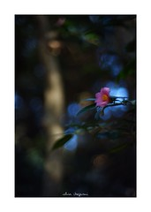 2019/2/2 - 1/15 photo by shin ikegami. - SONY ILCE‑7M2 / Lomography New Jupiter 3+ 1.5/50 L39/M (shin ikegami) Tags: asia sony ilce7m2 sonyilce7m2 a7ii 50mm lomography lomoartlens newjupiter3 tokyo sonycamera photo photographer 単焦点 iso800 ndfilter light shadow 自然 nature 玉ボケ bokeh depthoffield naturephotography art photography japan earth