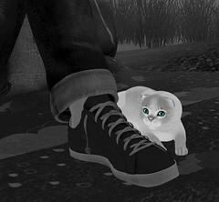 Shoelaces... (Hazel Foxtrot) Tags: sl second life kittycats kitten cat shoe sneaker foot cuff jeans grass