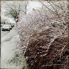 De la pluie verglaçante en avril, c'est pas une blague... (woltarise) Tags: streetwise hipstamatic iphone7 vents rafales rosemontpetitepatrie montréal verglas pluie 8avril2019