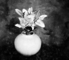 Lilies in White Vase (kinglear55) Tags: flower vase adobe elements textures blackandwhite monochrome kodak ultramax400 ishootfilm filmisnotdead olympus om2n art photography