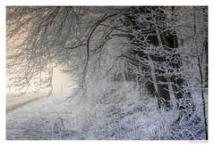wintry (Der Zeit die Augenblicke stehlen) Tags: deutschland eos700d landschaft mühlhausen thomashesse thüringen winter wintry hth snow trees street