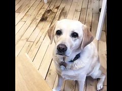 Dog Waiting patiently for you to accidentally drop your food (tipiboogor1984) Tags: aww cute cat funny dog youtube