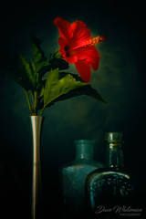 Wednesday Still Life (Dave Whiteman - AU) Tags: greenglass stilllife flower hibiscus apothacarybottles floral