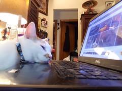 Carson (neshachan) Tags: cat carson