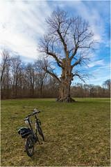 Im Englischen Garten, München (Janos Kertesz) Tags: englischergarten münchen bayern baum fahrrad englishgarden munich bavaria tree bicycle