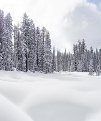 Yosemite National Park (dan tsai) Tags: snowshoe olympusomdem5 em5 landscape winter nature nationalpark mountains snow trees yosemite travel hiking waterfall olympus yosemitenationalpark portrait mountain omd