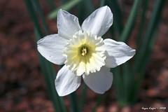 IMG_5553 (Roger Kiefer) Tags: dallas arboretum flowers outdoors beauty nature