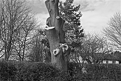 Bishop Burton  Monochrome (brianarchie65) Tags: bishopburton cherryburton beverley trees logs timber hedges grass sky geotagged brianarchie65 canoneos600d eastyorkshire eastridingofyorkshire a1079 blackandwhite blackandwhitephotos blackandwhitephoto blackandwhitephotography blackwhite123 blackwhiterealms unlimitedphotos ngc flickrunofficial flickr flickruk flickrcentral flickrinternational ukflickr monochrome