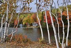 le bonheur au bord de l'eau (bis) (jean-marc losey) Tags: canada québec charlevoix lac lake automne autumn randonnée bouleau forêt érable d700