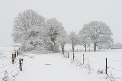 White landscape (gillesfrancotte) Tags: 2019 awan aywaille belgium january outdoor piromboeuf campagne countryside extérieur field grass grassland landscape landschap meadow nature neige outside paysage plaine rural snow tree white winter