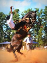 Vitor e Macumbeiro da Combate (Eduardo Amorim) Tags: gaúcho gaúchos gaucho gauchos cavalos caballos horses chevaux cavalli pferde caballo horse cheval cavallo pferd pampa campanha fronteira quaraí riograndedosul brésil brasil sudamérica südamerika suramérica américadosul southamerica amériquedusud americameridionale américadelsur americadelsud cavalo 馬 حصان 马 лошадь ঘোড়া 말 סוס ม้า häst hest hevonen άλογο brazil eduardoamorim gineteada jineteada