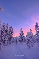 Pink (mousstique) Tags: cold snow arctic north nature open tree outdoors winterlight winter bluehour pink pinksky