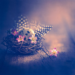 Hello Spring (Ro Cafe) Tags: nikkor105mmf28 sonya7iii stilllife nest flowers feathers egg naturallight spring romantic textured