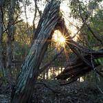 Frame within a frame - sunburst thumbnail