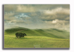 Trees and Hills (Rohit KC Photography) Tags: simple minimal landscape trees hills foggy clouds sky cloudy outdoors hazey canon canondslr canon5dm2 edited framed beautiful landscapephotography rohitkcphotography beautifulview less green blue shadow nature fog