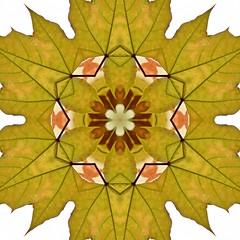 Kaleido Abstract 1904 (Lostash) Tags: art abstract edited nature patterns symmetry kaleidoscopes