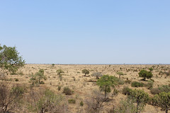 View from Mlondozi Dam Picnic Site (Rckr88) Tags: krugernationalpark southafrica kruger national park south africa mlondozi dam picnic site mlondozidampicnicsite view from viewfrommlondozidampicnicsite naturalworld nature outdoors landscape tree trees