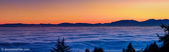 Sea of fog with evening glow (james c. (vancouver bc)) Tags: aerialview background beautiful beauty blue britishcolumbia canada glow evening fog foggy foreground green landscape mist misty mountain nature outdoor range scenery scenic sky sunset tourism tree winter red orange seaoffog colour colorful color vancouver island seainlet burrardinlet fullof westvancouver bc panorama panoramic