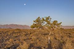 _RJS4710 (rjsnyc2) Tags: 2019 africa d850 desert dunes landscape namibia nikon outdoors photography remoteyear richardsilver richardsilverphoto safari sand sanddune travel travelphotographer animal camping nature tent trees wildlife
