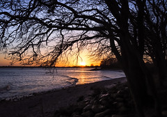 winter sunset at the Baltic sea (claudia.kiel) Tags: strande ostsee balticsea meer strand beach baum tree sonnenuntergang sunset sunsetmood silhouette