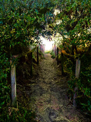 The Beach Path (Steve Taylor (Photography)) Tags: path railing dune green brown black sand newzealand nz southisland canterbury christchurch trees glow texture sunny sunshine southnewbrighton
