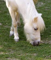 Birmingham Zoo 09-29-2017 - Horse 1 (David441491) Tags: birminghamzoo horse equine