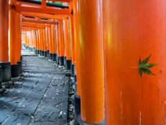 Leave, at Fushimi Inari Taisha (beeldmark) Tags: kyoto gebouw tempel japan zomervakantie building kansai kyōto nihon nippon summerholiday 京都 日本 関西 kyōtoshi kyōtofu jp fushimiinaritaisha 伏見稲荷大社 神社 鳥居 torii gate