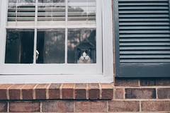 Waiting for You (Christine Quarte) Tags: red cat house window kitten furbaby home windows lonely waiting missing 365 daily indoor