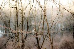 winter (bidutashjian) Tags: landcape nikond3500 bidutashjian snow ice trees winter forest woods frozen light patterns colors textures