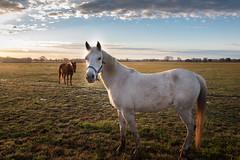 DSC_3630-Edit (don yurewicz) Tags: abigfave texas rescuehorses sunrise