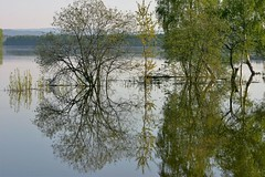 from last year's flood (EllaH52) Tags: river water flood tree trees reflections summer sun light nature