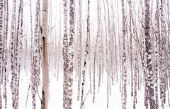 la forêt enchantée (Mccin) Tags: forêt montalbert montagnes neige randonnée raquette