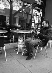 Companion (Tim Roper) Tags: 28mm elmarit leica paloalto dilutionb dogs film hc110 hp5 iso800 street dog blackandwhite ilford analog