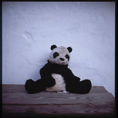 Drunk Panda (Jens Jacob - Hej!) Tags: fujirdpiii fuji slide panda mediumformat mellemformat schneiderkreuznach film hangover rollei v700 perfectionv700 drunk xenotar wall 6x6 120 rolleiflex28e badpanda