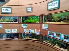 AQUARIUM PANORAMIQUE (marsupilami92) Tags: frankreich france îledefrance hautsdeseine 92 îledelajatte levallois aquarium