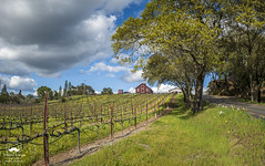 A New Spring in Sonoma County (allentimothy1947) Tags: califonia drycreekroad heidsburg sonomacounty beautiful beauty blooms blossems blue clouds colorful flowers grass green house plants red road sky spring stormy trees uphill vines vineyard wine