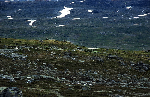 "Norwegen 1998 (295) Strynefell • <a style=""font-size:0.8em;"" href=""http://www.flickr.com/photos/69570948@N04/46533520594/"" target=""_blank"">View on Flickr</a>"