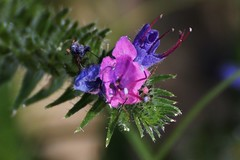 Wild Flower (Hugo von Schreck) Tags: hugovonschreck flower blume blüte macro makro canoneos600d tamron70300mm