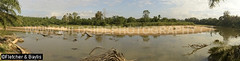 41905 Sandy point bars provide nesting habitat for Southern River Terrapins (Batagur affinis), Terengganu, Malaysia. IUCN=Critically Endangered. (K Fletcher & D Baylis) Tags: panorama habitat nestinghabitat geomorphology fluvialgeomorphology river pointbar sand animal wildlife fauna reptile turtle testudines geoemydidae riverterrapin tuntung southernriverterrapin batagur bataguraffinis batagurbaska criticallyendangered nest nesting conservation turtleconservationsociety terengganu malaysia asia february2019