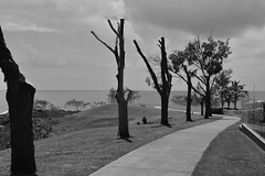 Coral Cove [Bundaberg] (Dreaming of the Sea) Tags: 2019 blackandwhite tamronsp2470mmf28divcusd nikond7200 silhouette clouds outdoor landscape ocean deadtree monochrome palmtrees sheoak rocks coralsea coralcove innespark bundaberg queensland australia