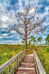 Nearing the End of the Journey (Charles Patrick Ewing) Tags: tree sky clouds landscape landscapes new original beautiful all everything bridge boardwalk fave faves best nikon florida trees grass storm art artistic