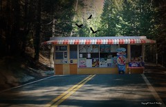 The Ultimate Drive Thru (Little Hand Images) Tags: highway forest dairyqueen 1954 drivethru birds