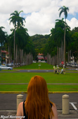 Panama city. Ginger on a symetric and bokeh background. (MontenegroGuerrero) Tags: panamacity nikond3300 nikonistas nikon blurry pelirroja ginger panama bokeh