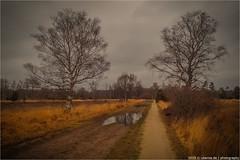 _buurzersand (l--o-o--kin thru) Tags: nederland buurzersand gravelbike