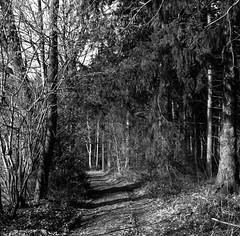 Winter forest track (Rosenthal Photography) Tags: ff120 asa400 analog epsonv800 landschaft mittelformat mediumformat 20190301 rodinal12521°c105min 6x6 ilfordrapidfixer anderlingen städte zeissikonnettar51816 rolleiretro400s dörfer siedlungen winter forest track trail way pathway path road landscape trees mood february zeiss ikon nettar 51618 novar anastigmat rollei retro retro400s rodinal 125 epson v800