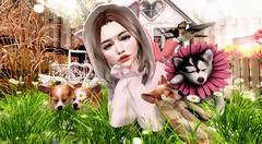 ♥♥♥ (ღ ღ[[J E SSIE ]] ღ ღ) Tags: babyface girl secondlifephoto genus secondlife cute kawaii sl maitreya prtty photography blackbantam halfdeer
