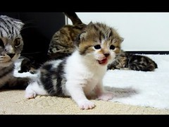 Too Cute Cats and Kittens videos Compilation (videosloving) Tags: cats cutecats cuteanimals kittens amazing justforfun justforlaugh viralvideo video videosloving viral trynottolaugh trending latest laughter new animalslove animals compilation comedy fails gags