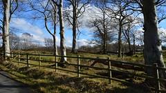 Small Copse, Ayrshire, Scotland. (Phineas Redux) Tags: smallcopseayrshirescotland scottishlandscapes scottishscenery scottishlanes countrylanes trees scotland