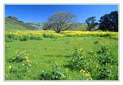 Colors of Springtime - Cambria, California, 2000 (sjb4photos) Tags: california cambriacalifornia wildflowers coastrange epsonv500